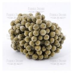 Bayas de azúcar de viburnum color dorado