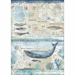 History of the Whale A3 Colección Arctic Antarctic - Stamperia